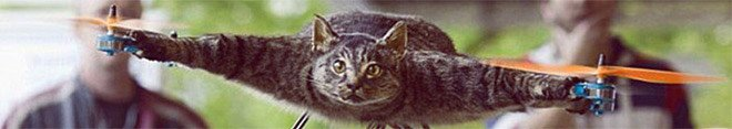 кот летит - кот вертолёт