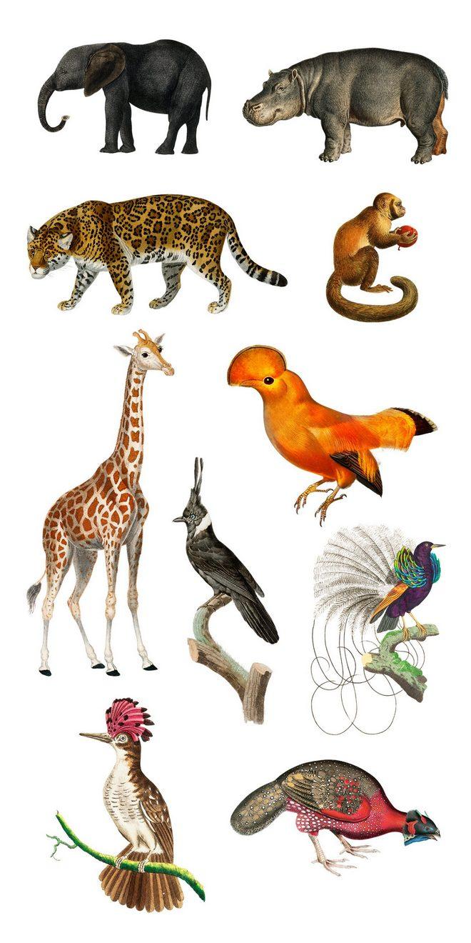 Иллюстрации диких животных и фантастических птиц
